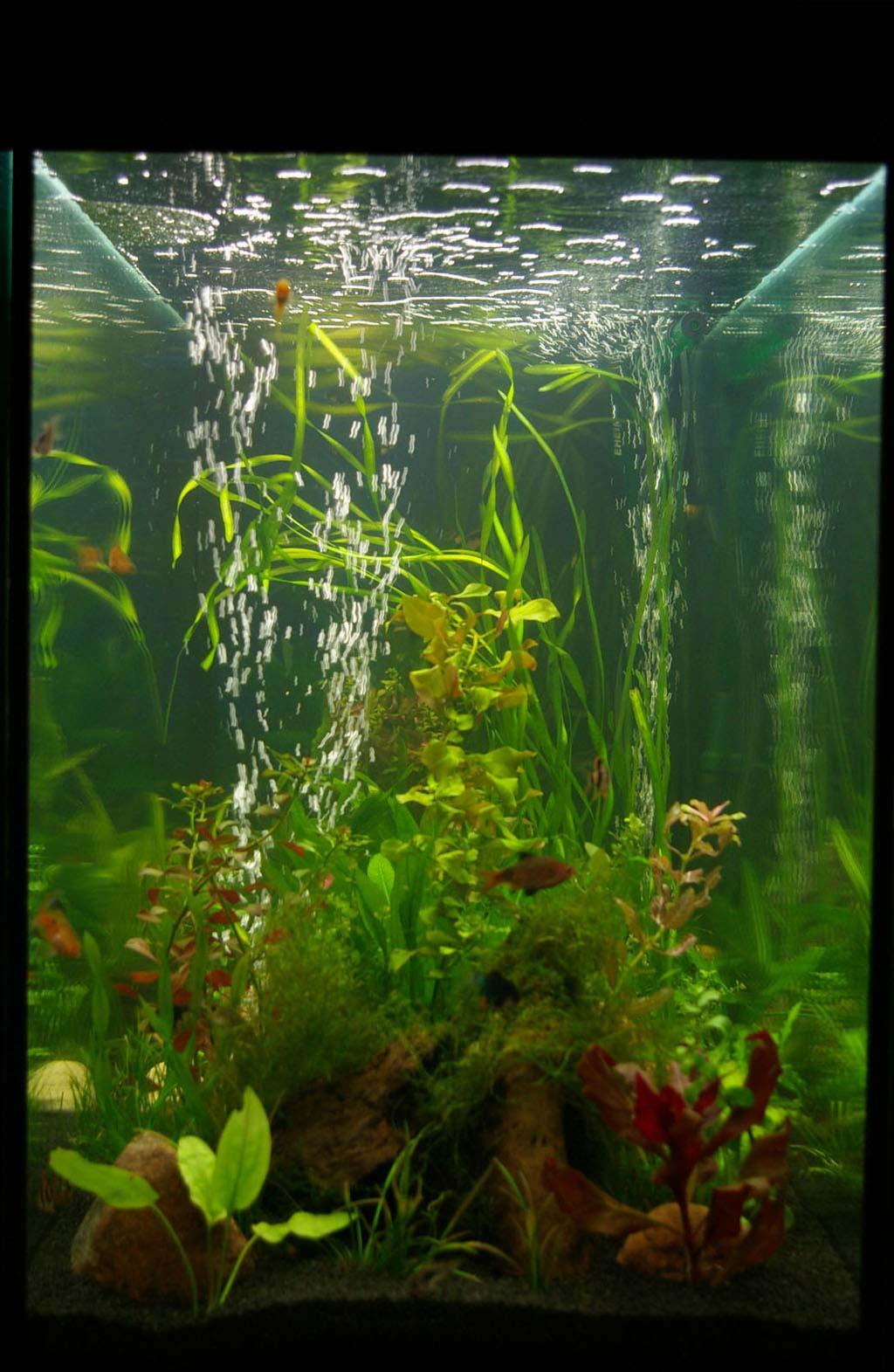 Аквариумные рыбки, фото и название, купить, виды, описание