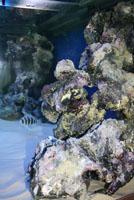 Грот для аквариума из пены