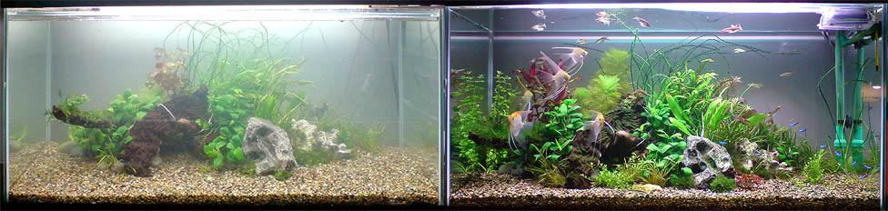 Заводим аквариум