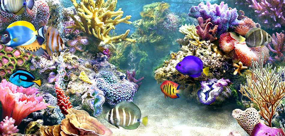 скачать живой аквариум на рабочий стол бесплатно - фото 2